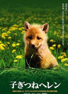 生命奇迹小狐狸
