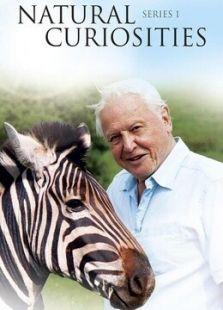 BBC:大卫·爱登堡的自然珍品